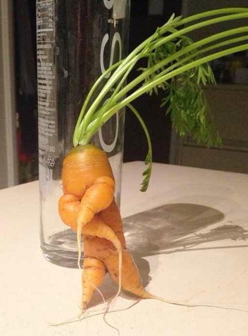 20-fruits-et-legumes-exceptionnels-qui-prennent-forme-humaine-ou-animale-13