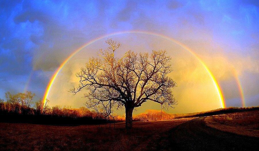 L_'arc et l_'arbre de l_'amitie