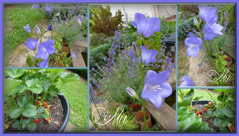 jardin 23 mai 19