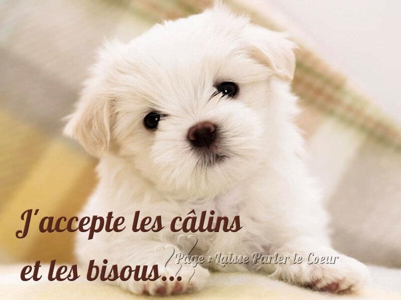 calins_025