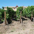 Bâtiments techniques vu des vignes