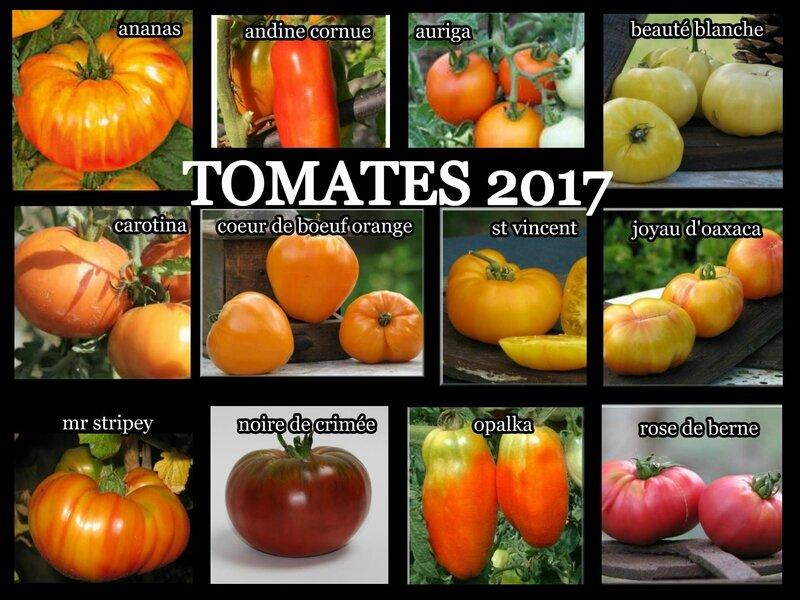 tomates 2017 1