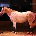Spectacle cabaret equestre aout 2019