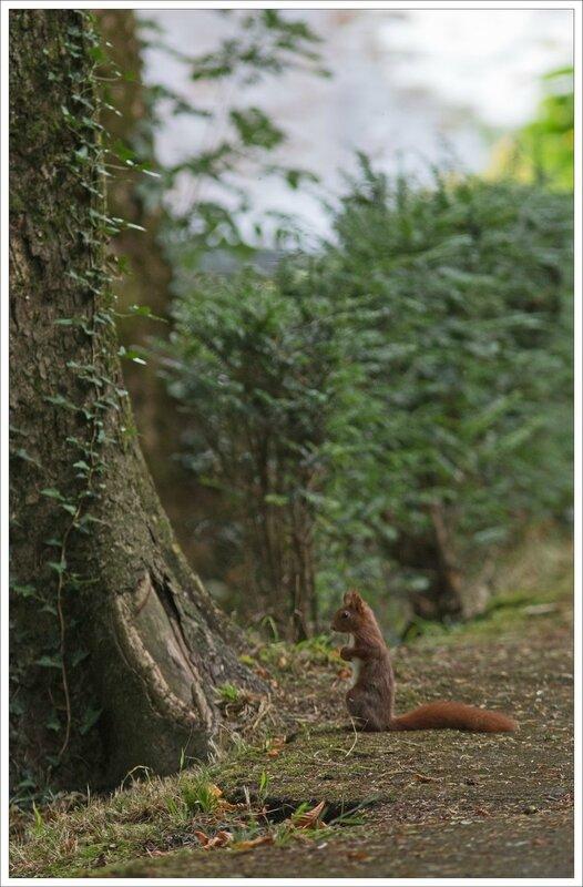 ville ecureuil debout devant arbre 4 030716