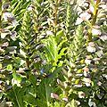fleurs-de-breche (30)