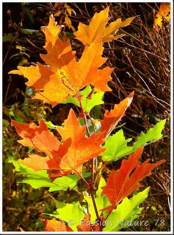 Feuilles en automne (15)