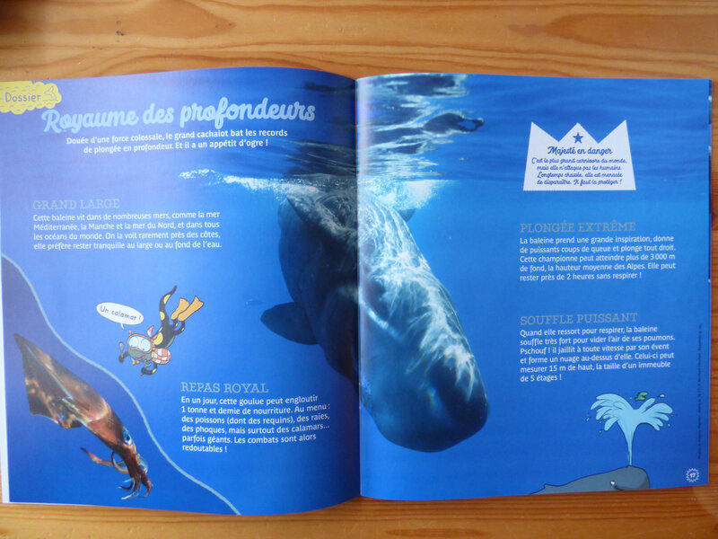 Petite Salamandre Baleine (2)