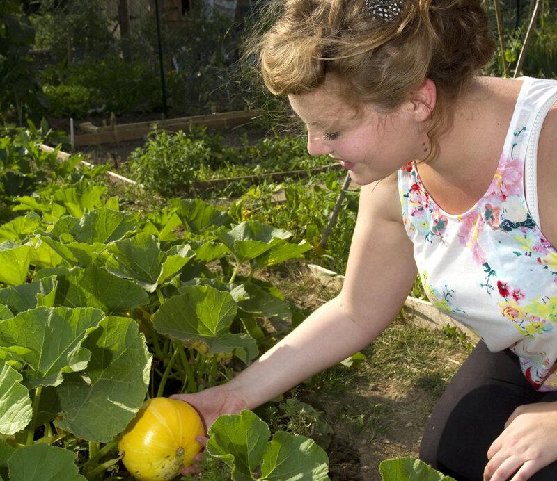 jardin-potager-recolte-credit-lanceau-truchet