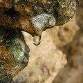 Goute sur roche