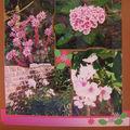 phlox et plantes de rocaille