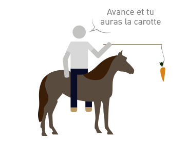 TopoAlimentation-PNG1carotte