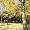 Tokyo autumn porn