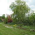 IMG_1868a
