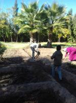 le début de l'action de plantation