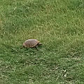 Clic clac chez tortue