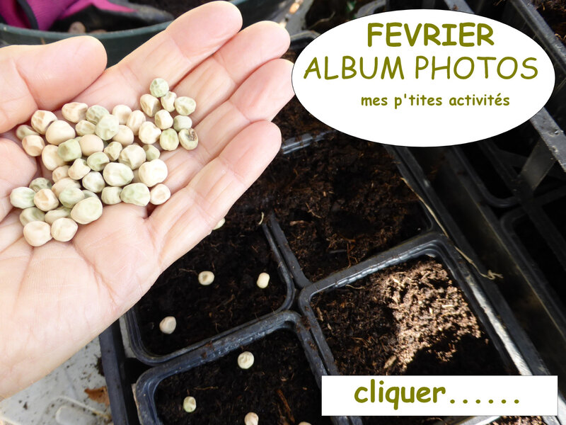 février - album photos