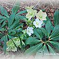 Fleur au jardin 30 01 2012 042 copie