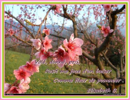 000048_fleurs_d_arbres_frutiers