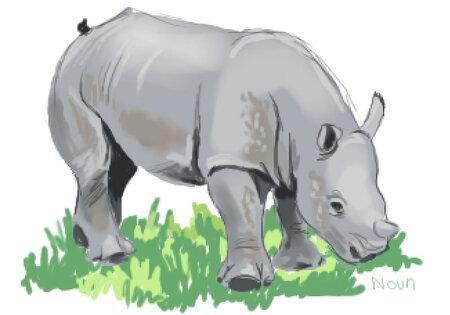 rhino_enfant