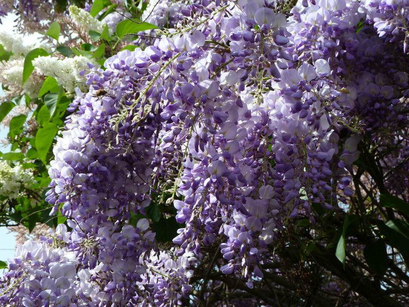 fleurs et jardin (13)