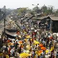 fleurs oranges et jaunes de Calcutta