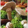 Champignons, glands