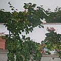 Fin des geraniums ... ou presque