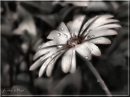 Fleur_et_effet