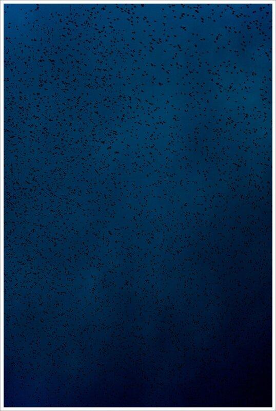 ville etourneaux nuage soir 010216