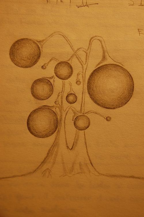 drole_d_arbre