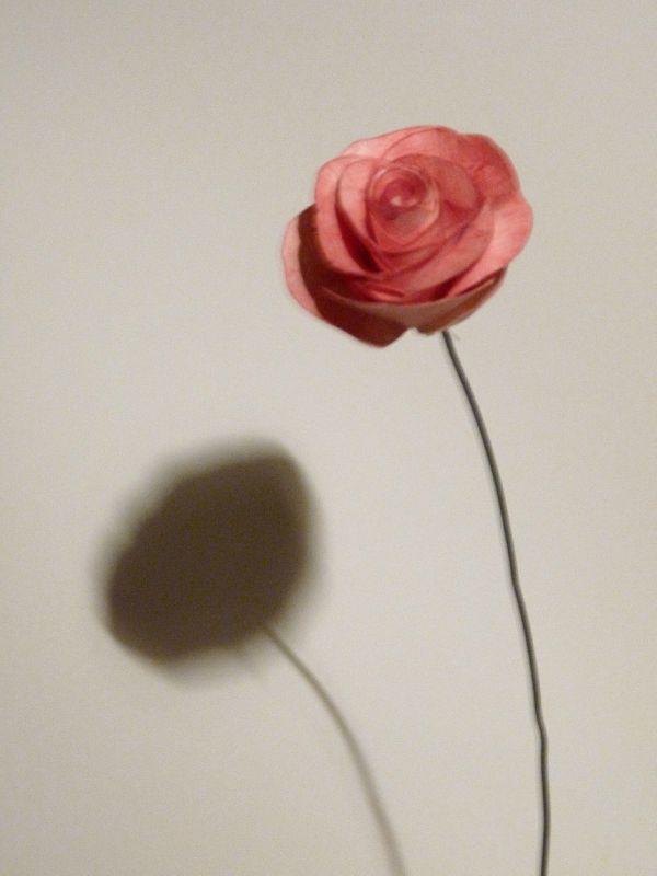 Rose de papier et acquarelle