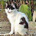 Faune - chats de berrre l'etang