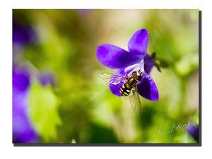 mouche-abeille-web