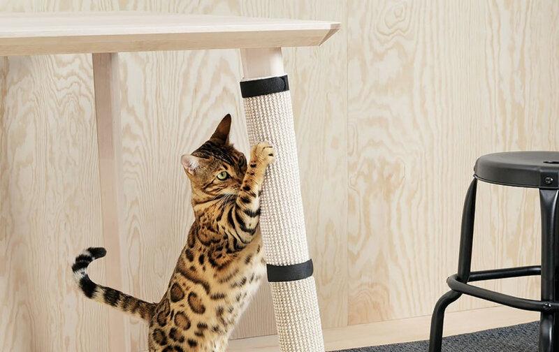 5-accesorios-para-gatos-que-debes-tener-en-casa