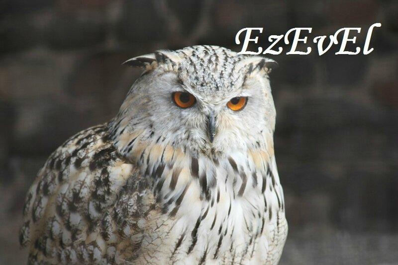 Volerie aigles EzEvEl 9