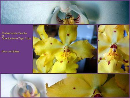Montage_orchid_e
