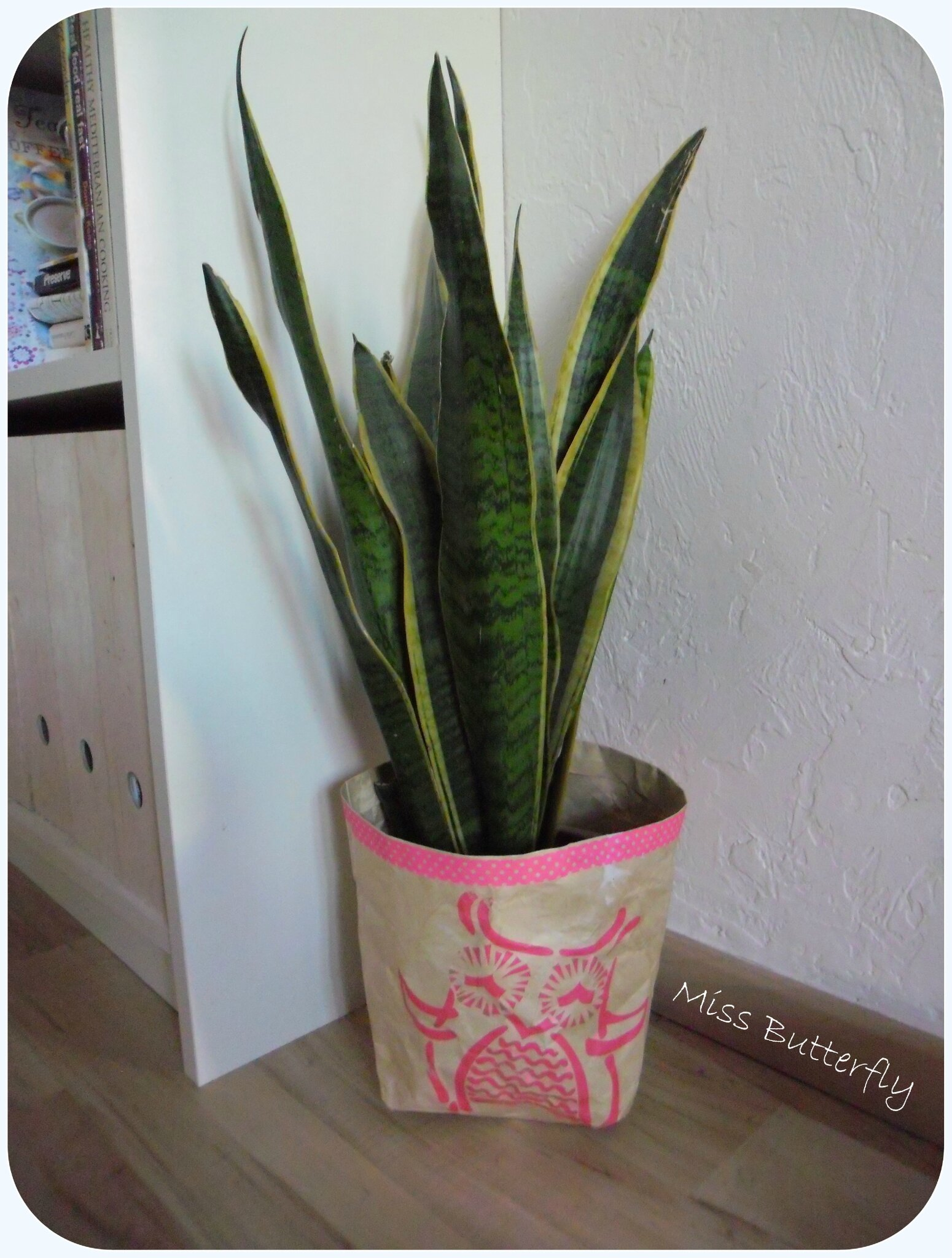 chouette snake plant