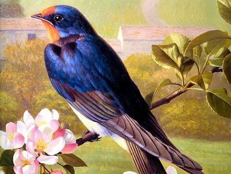 Oiseaubleu