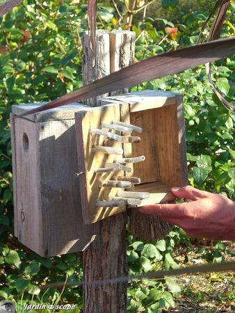 Boite d'observations de reproduction des insectes