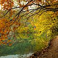 chemin foret automneiytUM1qc76t1o1_500
