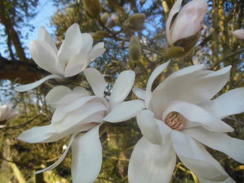 printemps 4