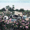 les roses de GRISY SUISNES (cartes postales anciennes)
