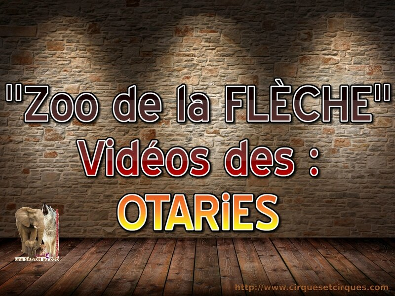 - ZOO de la FLECHE ViDEOS des OTARiES
