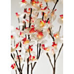 orchid_es_lumineuses