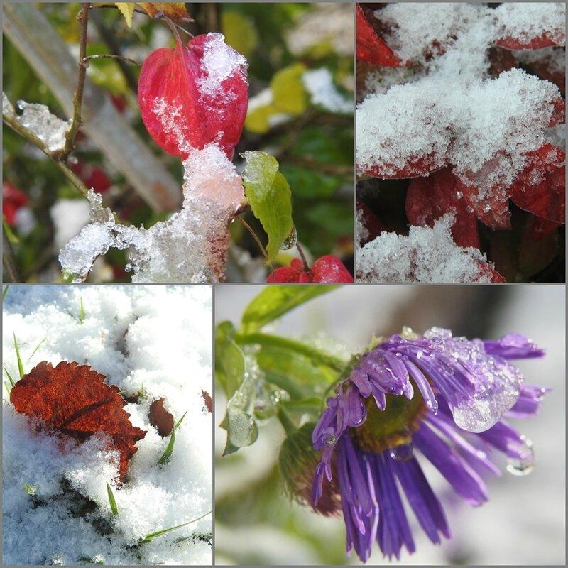 végétal sous la neige