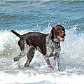 chien_vacances_5