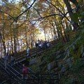 Mont royal 21oct 034