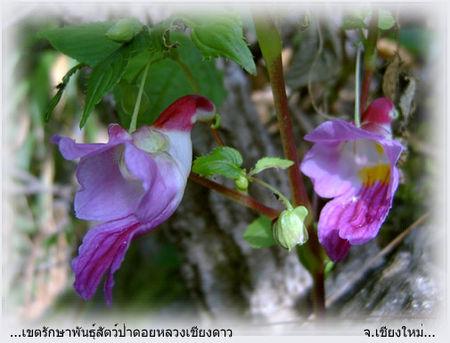 fleur_oiseau_2