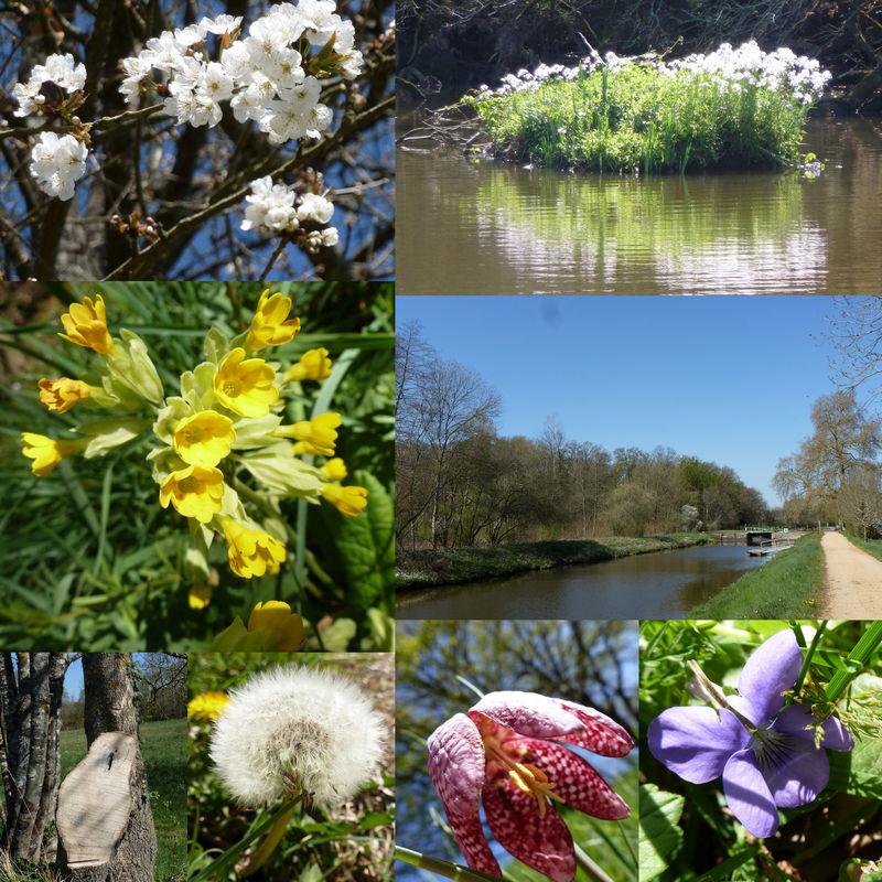 fleurs du canal2