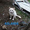 Aslande